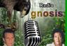 Radio Gnosis